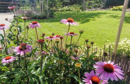 Zahrada v Dejvicích - druhý rok po založení
